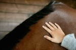 MASSAGE THERAPY - EQUINE