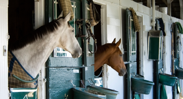 Equine Services