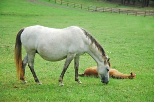 all points equine Reproduction