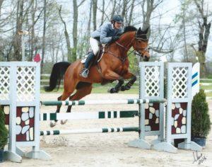 Jumper Mare Cassidy