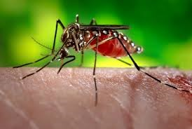 Fall News West Nile Virus Equine