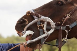 Fall 2017 Preventative Care Reminders for Horse Dentistry and other fall specials like Acupuncture and Chiropractic Care.