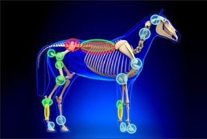 Equine Shock Wave Therapy with ProPulse from PulseVet